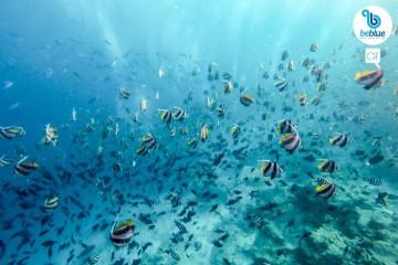 Pasqua alle Maldive: flottiglia in catamarano
